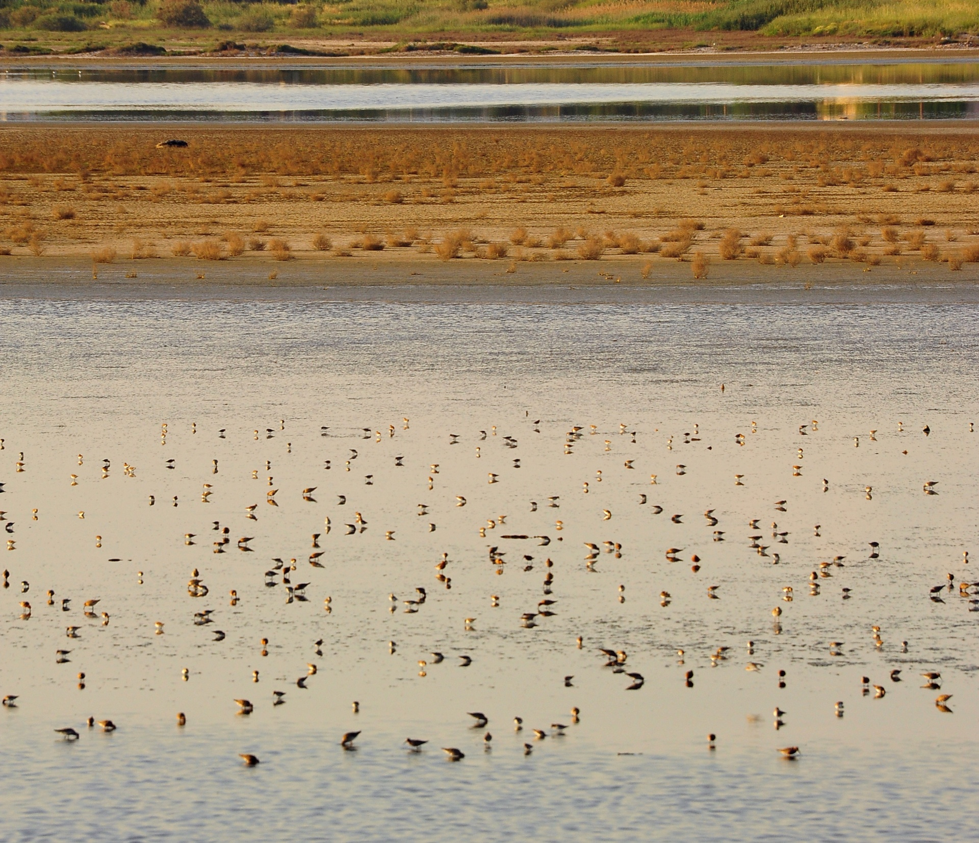 Explore the coastal wetlands just 30' away from the city center